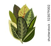 exotic tropical leaves. vintage ... | Shutterstock .eps vector #523079302