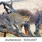 leopard | Shutterstock . vector #52311037