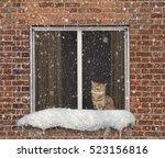 The Cat Sits On A Window. It I...