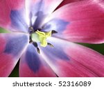 macro of a colorful flower - stock photo