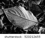 Leaf Texture  Detail  Black And ...