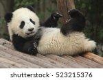 happy baby panda | Shutterstock . vector #523215376
