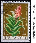 "Small photo of USSR - CIRCA 1972. Postage stamp of the series ""Medicinal Plants"" with a picture of Krantz Aloe or Candelabra Aloe (Aloe arborescens Mill), circa 1972"