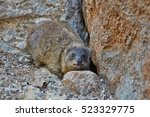 rock hyrax | Shutterstock . vector #523329775