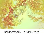 vintage beautiful tree in... | Shutterstock . vector #523432975