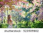 beautiful girl in cherry...   Shutterstock . vector #523509802