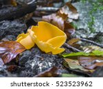 Small photo of Orange peel fungus (Aleuria aurantia)