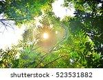 Komorebi  Sun Ray Penetrates...