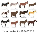 Donkey Breeds Icon Set. Animal...