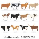 cattle breeding farming. cow ... | Shutterstock .eps vector #523629718