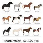horse breeding isolated icon... | Shutterstock .eps vector #523629748