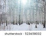 birch forest on blue sky... | Shutterstock . vector #523658032