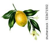 illustration of yellow  lemon...   Shutterstock . vector #523671502