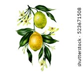 branch of watercolor  lemon...   Shutterstock . vector #523671508