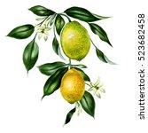 big watercolor branch of lemons ...   Shutterstock . vector #523682458