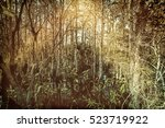 Tropical Forest Swamp  Florida...