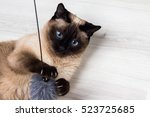 Stock photo siamese cat cat playing with a mouse black and white shorthair cat copy space advertising toys 523725685
