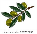 branch with olives  freehand... | Shutterstock .eps vector #523732255