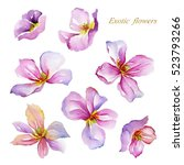 Exotic Flowers Painted In...