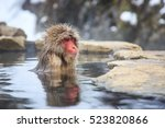 Snow Monkey At A Natural Onsen...