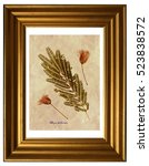 Small photo of Herbarium from pressed and dried leaves and flowers of Persian silk tree with Latin subscript (Albizia julibrissin) in the frame on white background.