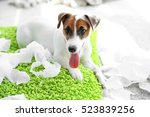 Jack Russell Terrier Biting...