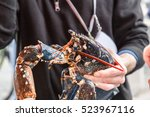 alive lobster in hand of... | Shutterstock . vector #523967116