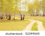 road in spring forest - stock photo