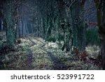 Dark Winter Path Between Dead...
