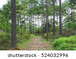 hiking trail through  walking... | Shutterstock . vector #524032996