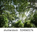 green tree branches nature in... | Shutterstock . vector #524060176