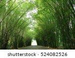 bamboo tunnel reforestation for ... | Shutterstock . vector #524082526