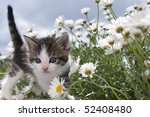 Stock photo young cat between flowers 52408480