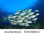 Fish School On Underwater Cora...