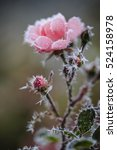 winter in the garden. the first ... | Shutterstock . vector #524158978