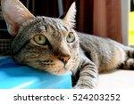 Stock photo cute cat in room 524203252