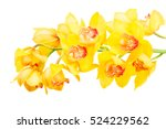 Yellow Orchid Blooming Flowers...