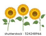 yellow sun flowers on white... | Shutterstock .eps vector #524248966