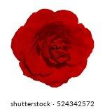 isolated beautiful dark red... | Shutterstock . vector #524342572
