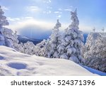Winter Fir Trees Snowy Landscape