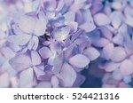 purple hydrangea flower close... | Shutterstock . vector #524421316