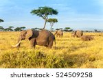 african elephant in the maasai... | Shutterstock . vector #524509258