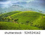 tea plantations in munnar ... | Shutterstock . vector #524524162