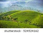 tea plantations in munnar ... | Shutterstock . vector #524524162