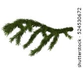 fir branch isolated on white ... | Shutterstock . vector #524530672