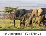 Small photo of African Elephants on the Masai Mara, Kenya, Africa