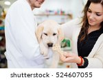 Stock photo beautiful young woman owner cuddling her gorgeous labrador retriever puppy on veterinary checking 524607055