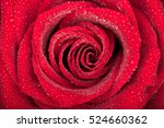 Stock photo close up of blossomed red rose with water drops blossomed rose texture 524660362