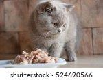 Cat  Kitten Eat Pet Food Indoor