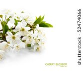 spring cherry blossom | Shutterstock . vector #52474066